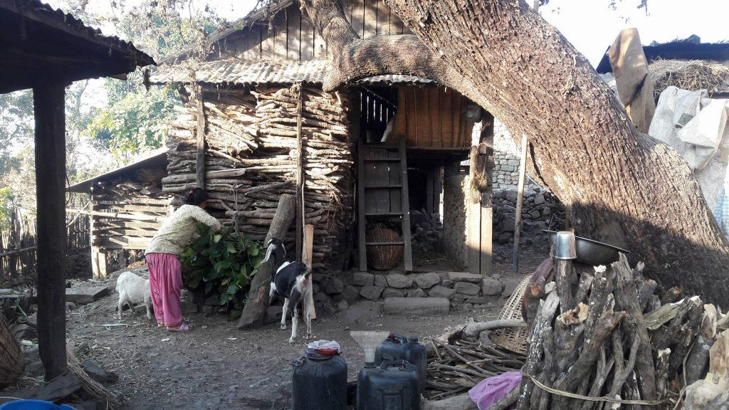 Unser Ziegenprojekt in Nawalparasi